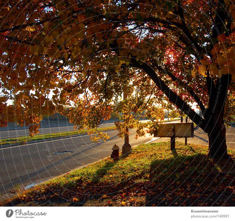 It's A Beautiful Day Baum Sonne rot Blatt Herbst Wärme fallen Indian Summer