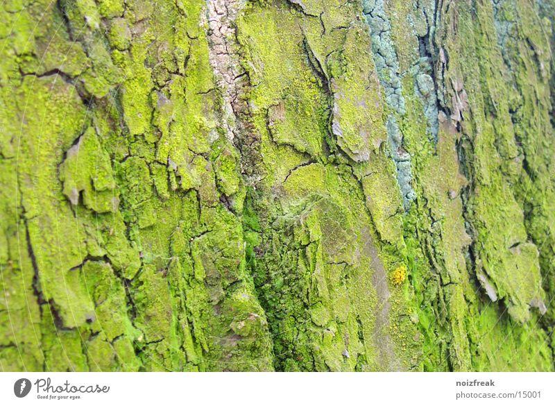wetterseite Baum grün Baumrinde Wetter Natur Moos