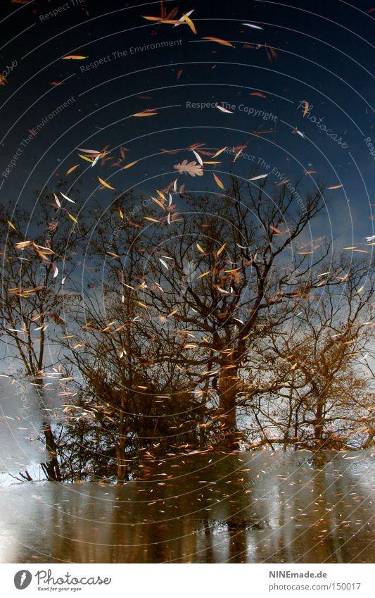 HerbstGemälde Baum Blatt See Wasser Eis gefroren kalt Wetter Herbstwetter Winter Reflexion & Spiegelung Frankfurt am Main Wald Park Spaziergang Sonntag