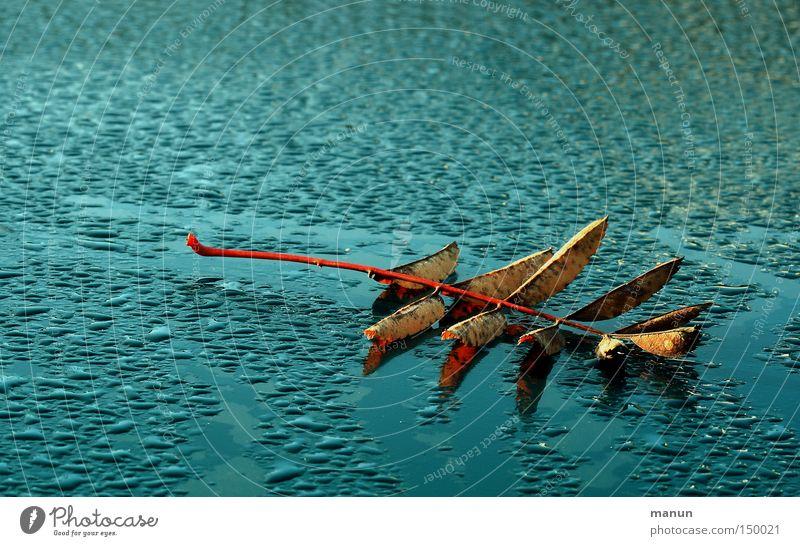 Blätterdach Herbst Blatt KFZ Lack Metall Metallwaren grün Vergänglichkeit herbstlich Natur Technik & Technologie ruhig Wetter Handwerk Verkehr Wassertropfen