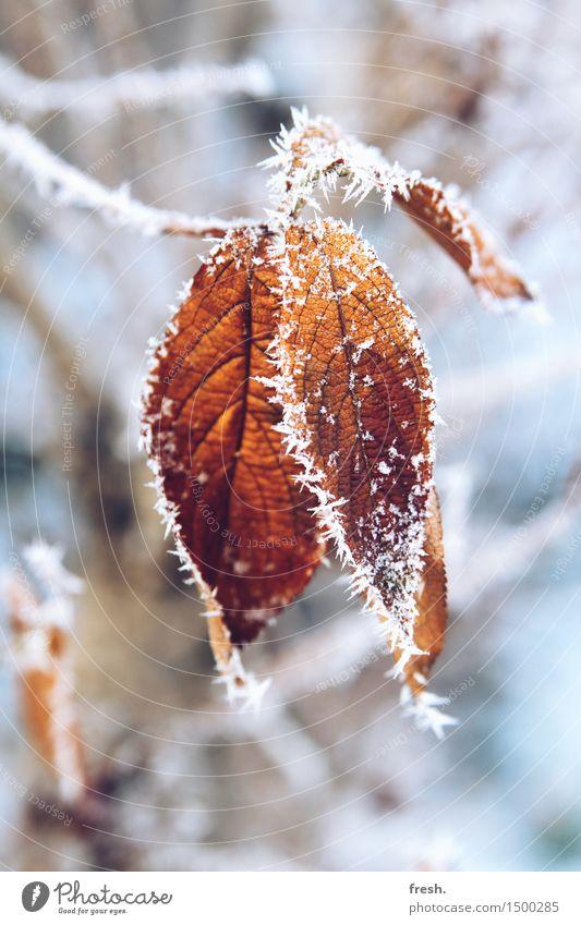 cold as ice Natur Ferien & Urlaub & Reisen Pflanze blau schön weiß Erholung Landschaft Blatt Winter kalt Schnee grau Schneefall orange glänzend