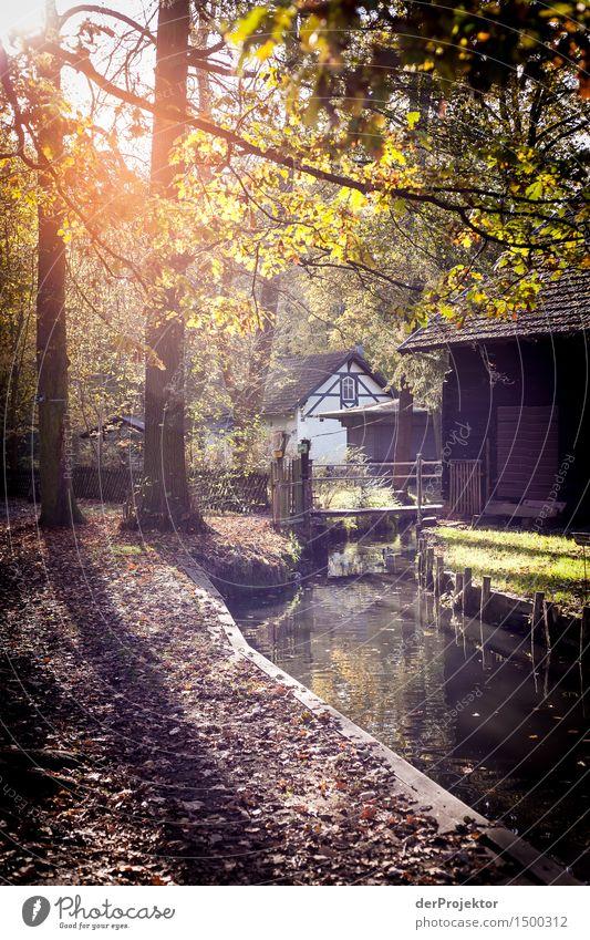 Kanale Grande im Spreewald 2 Natur Ferien & Urlaub & Reisen Baum Landschaft Blatt Haus Freude Ferne Umwelt Herbst Gebäude Freiheit Tourismus wandern Ausflug