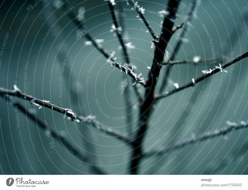 300 (!) glitzernde Sprenkel Natur blau Pflanze Blume Winter kalt glänzend Seil Frost Sträucher Ast zart Geäst filigran