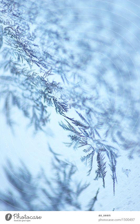 Eiskristalle Natur Weihnachten & Advent blau ruhig Winter kalt Umwelt Gefühle Schnee außergewöhnlich hell Design glänzend Wetter Eis ästhetisch