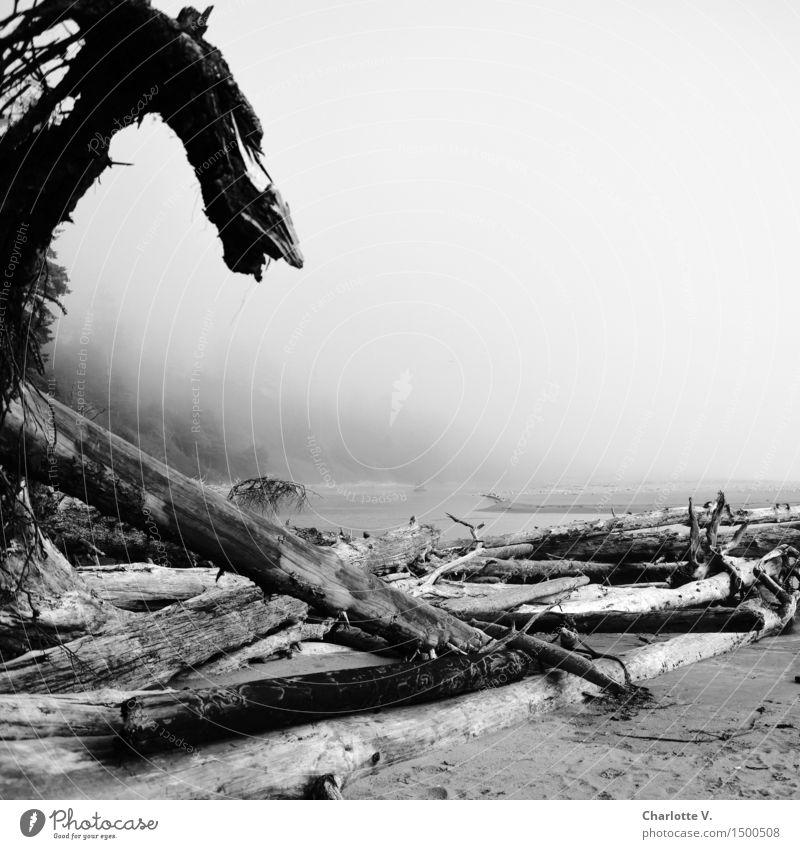 Drachenkopf Natur Wasser weiß Meer Einsamkeit Strand dunkel schwarz Küste Holz grau Sand Insel bedrohlich Urelemente skurril