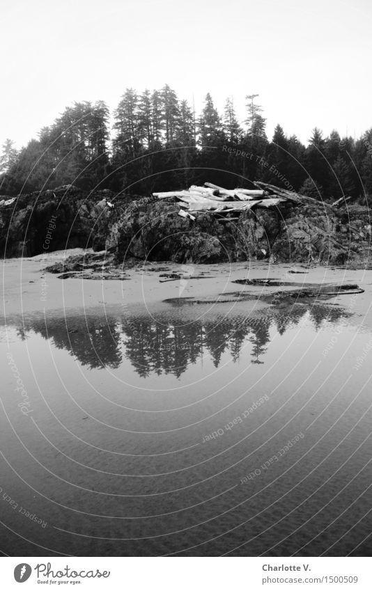 Spiegelung Natur Pflanze Wasser weiß Baum Meer Landschaft ruhig Tier Strand schwarz Küste Holz grau Stein Sand