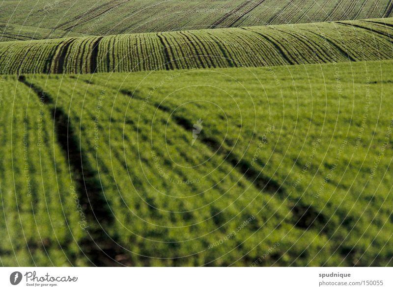 green waves Feld Hügel Wiese Aussaat säen Gras grün Linie Ferne Landleben Pflug pflügen Unschärfe Landschaft Frieden grasnabe grünlich Flucht Amerika landliebe
