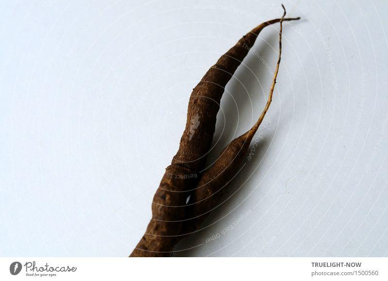 Märchen | Wünschelwurzn Lebensmittel Gemüse Wurzelgemüse Schwarzwurzel Ernährung Pflanze Nutzpflanze authentisch außergewöhnlich dunkel einfach exotisch fest