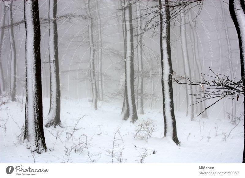 WinterTag Baum Wald Schnee weiß grau Nebel beschlagen schwarz Spaziergang Verhext Märchenwald Holz nass dunkel Eis Eiszeit Klimawandel Perspektive keine Sicht