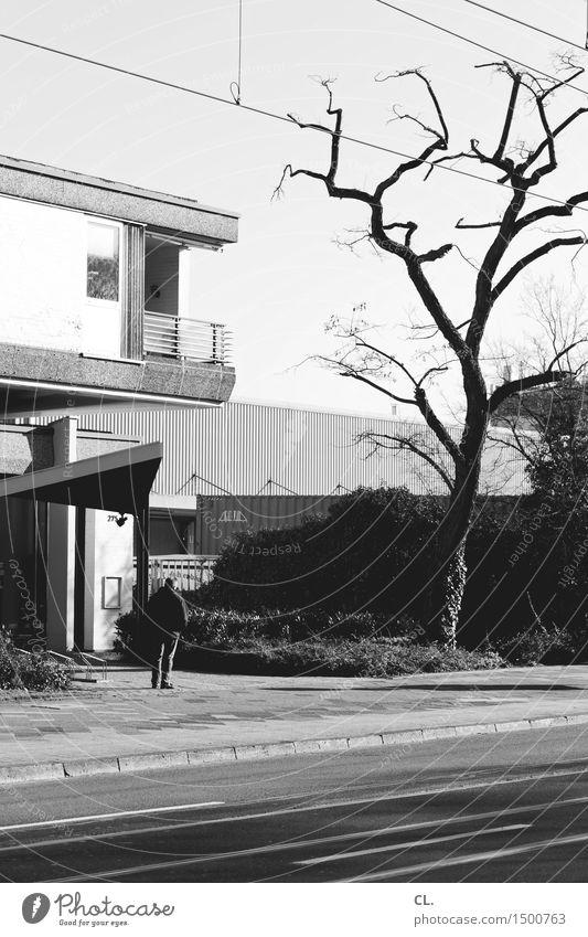 mann und baum Mensch maskulin Mann Erwachsene Leben 1 45-60 Jahre Herbst Baum Haus Gebäude Verkehr Verkehrswege Straßenverkehr Fußgänger Wege & Pfade stehen