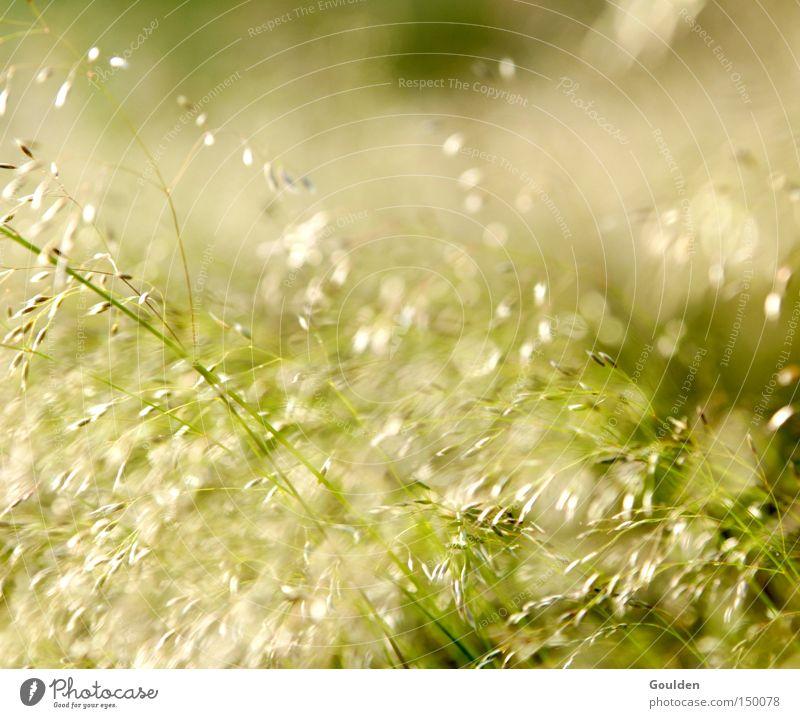 Heuschnupfen Gras Hoffnung Natur grün Sommer Wiese Freizeit & Hobby Wind Zeit träumen Umwelt Gesundheit