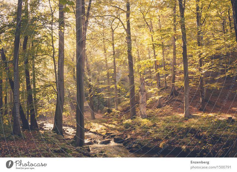 golden light forest Natur Ferien & Urlaub & Reisen Pflanze Sommer Baum Landschaft Wald Umwelt Frühling Gesundheit Glück Zufriedenheit Kraft Idylle Lebensfreude