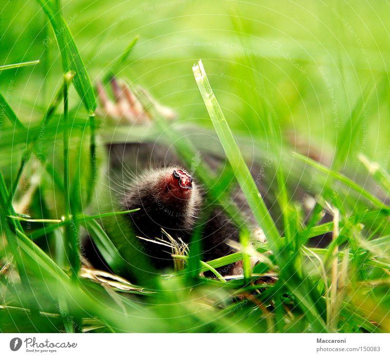 Erschlagen vom Update grün Tier Umwelt Wiese Tod Gras Garten liegen Erde Wildtier schlafen Trauer Fell Weide Tiergesicht Jagd