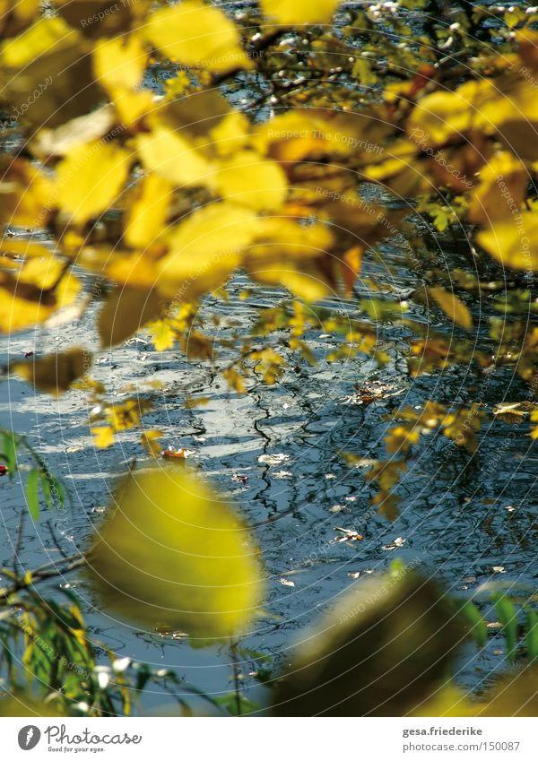 sieben.schön Natur Wasser Baum Blatt Herbst Bewegung Wellen