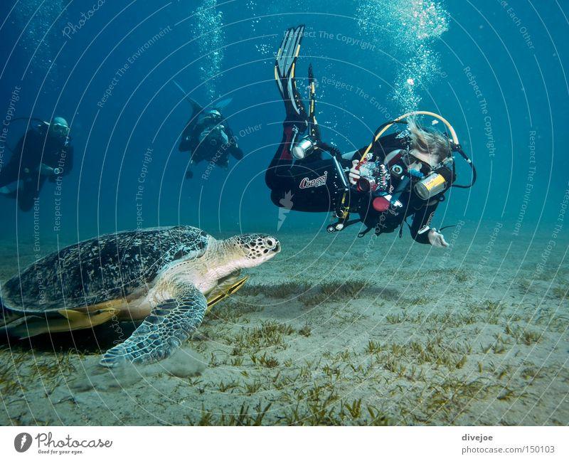 Schildkröte mit Tauchern Wasser Meer blau Sport Unterwasseraufnahme Spielen tauchen Blase türkis Luftblase hören Taucher Blubbern Schildkröte Reptil