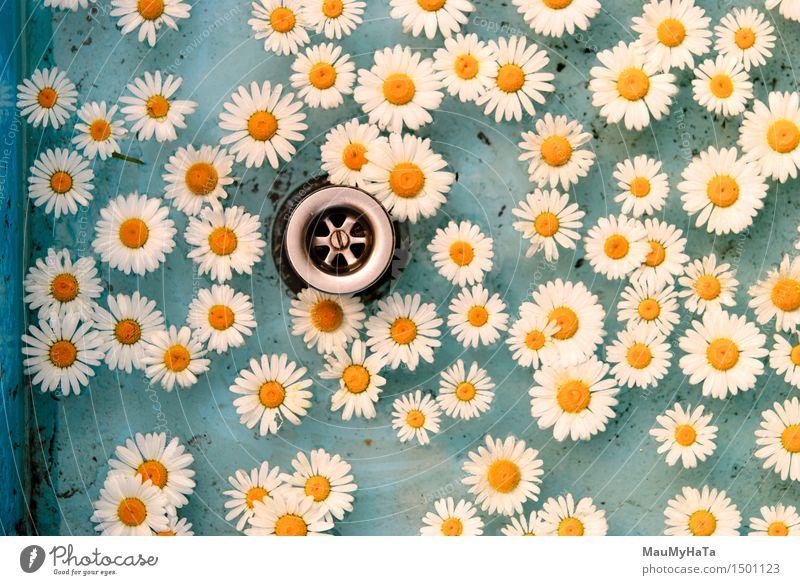 Blume im Wasser treiben Erholung Schwimmbad Sommer Sonne Bewegung Coolness nass blau weiß Licht Oberfläche Rippeln übersichtlich Schwimmsport Gänseblümchen