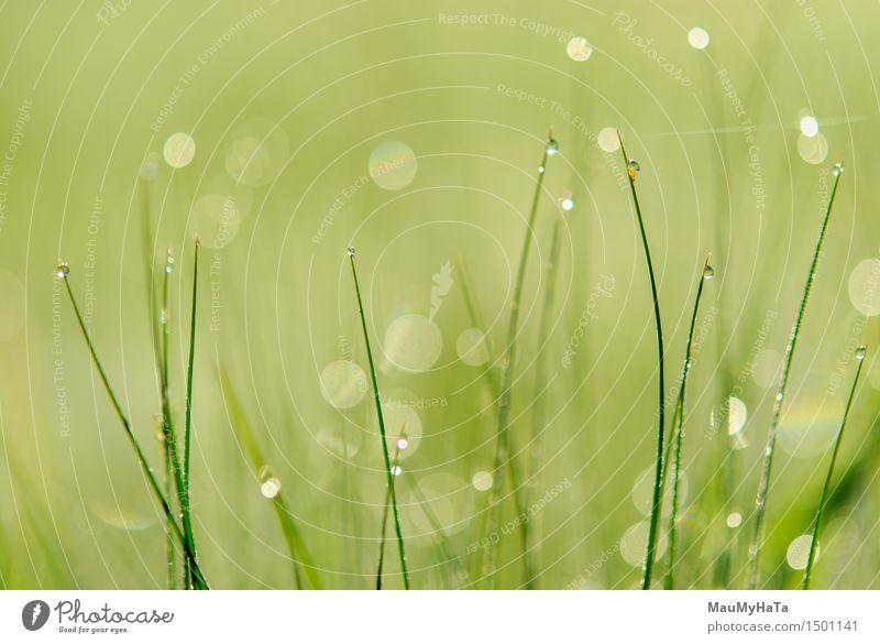 Wassertropfen Sonne Sonnenaufgang Sonnenuntergang Frühling Garten Park Feld Gefühle Frühlingsgefühle Tatkraft träumen Schmerz Farbfoto Außenaufnahme Nahaufnahme