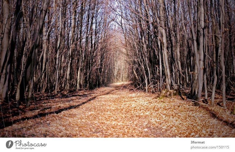 waldweg Wald Wege & Pfade Fußweg Winter Herbst Ödland kahl Panik verloren Märchen träumen Ziel Angst 3format