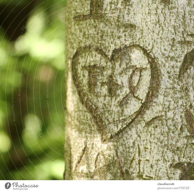 Beherzt Baum Liebe Herz Romantik Information Buchstaben Zeichen Symbole & Metaphern Furche Verliebtheit Erzählung Baumstamm Baumrinde schnitzen