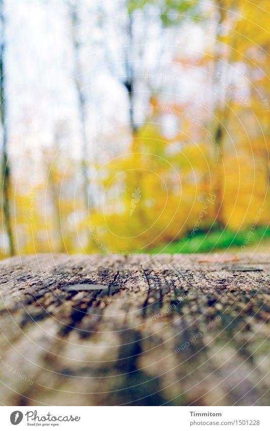 Sitz. Natur grün Erholung Wald Umwelt gelb Herbst Gras Holz hell Schönes Wetter Holzbank