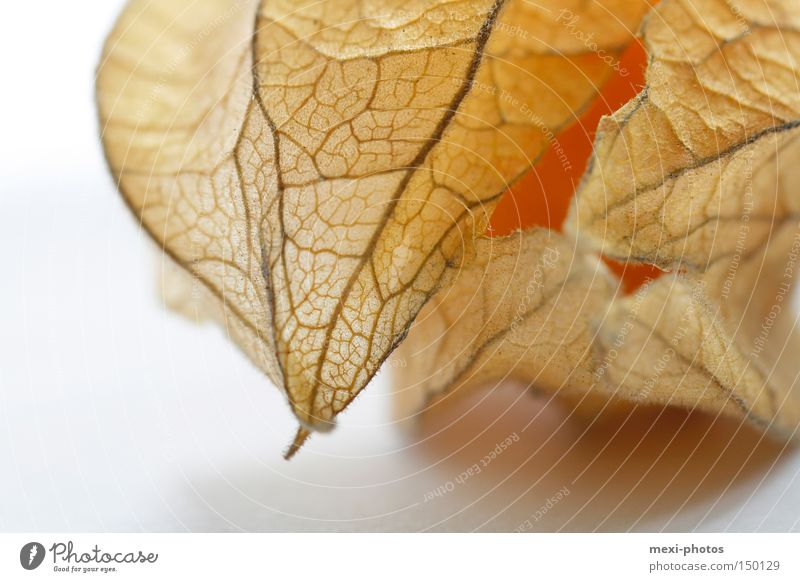 Physalis orange Gesundheit Frucht süß lecker Beeren Physalis Vegetarische Ernährung Südfrüchte Nachtschattengewächse