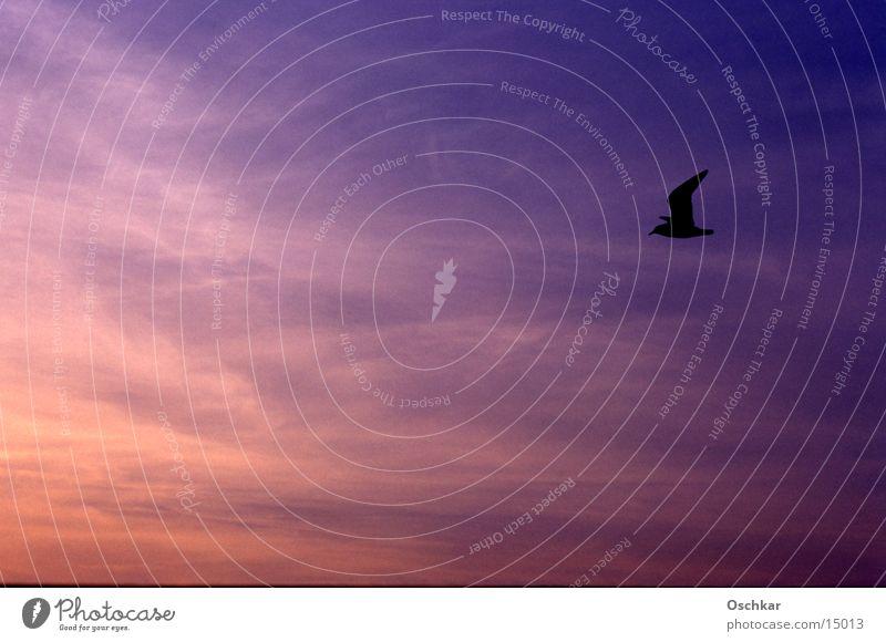 Vogel vs. Himmel Horizont Meer See Sonnenuntergang Wolken Verkehr Abend