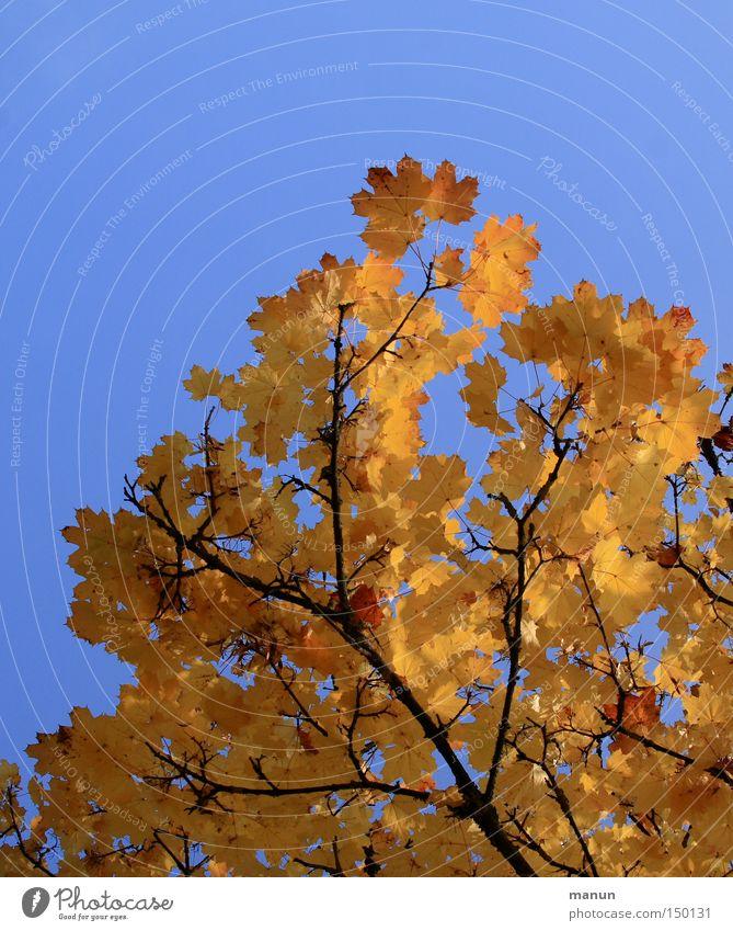 Sonniger Herbst II Natur schön Baum gelb Park Wärme Graffiti gold Schönes Wetter Färbung herbstlich prächtig Herbstfärbung