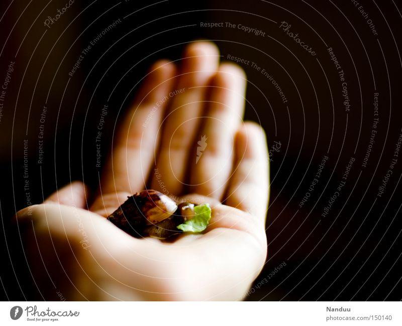 Ich bin klein, mein Herz ist rein Hand Ernährung Tier klein Fisch Schutz festhalten niedlich Fressen Schnecke Schwäche hilflos verwundbar schleimig schutzlos