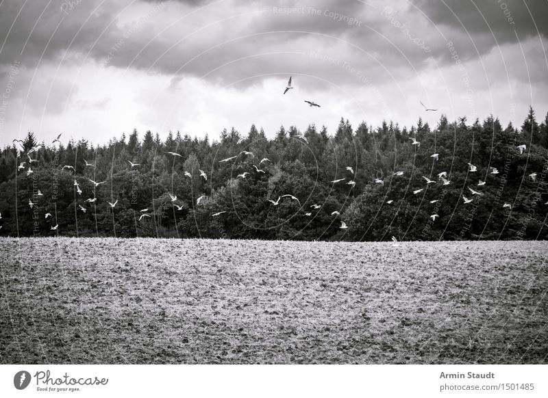 Düsteres Möwen-Über-Dem-Feld-Foto Umwelt Natur Himmel Wolken Herbst Winter schlechtes Wetter Wald fliegen schön trist Gefühle Stimmung Trauer Tod Sehnsucht