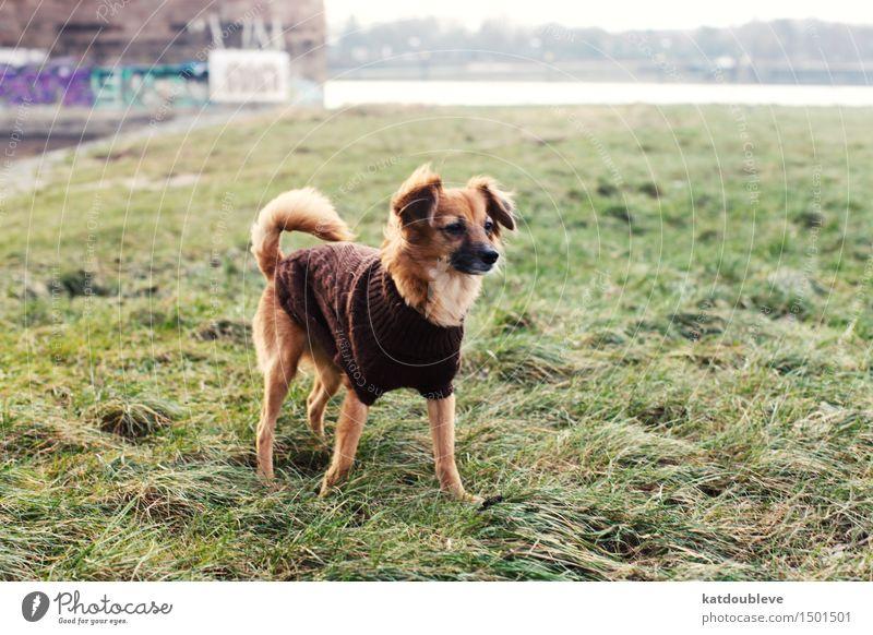 discover Umwelt Natur Pflanze Herbst Winter Wetter Nebel Grünpflanze Flussufer Hund Arbeit & Erwerbstätigkeit beobachten entdecken genießen hören Jagd niedlich