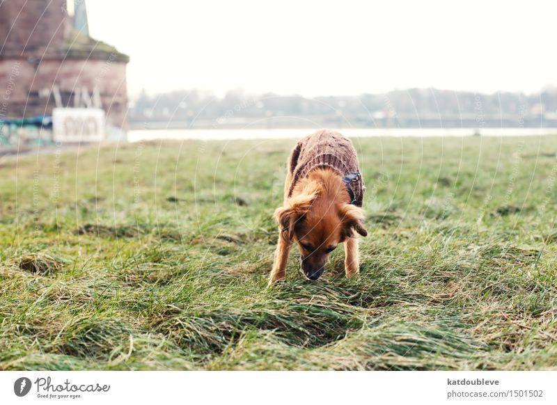 so much news Umwelt Natur Pflanze Herbst Winter Wind Nebel Gras Sträucher Grünpflanze Flussufer Hund Arbeit & Erwerbstätigkeit atmen entdecken Jagd lesen