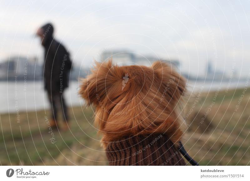 have in mind Hund beobachten genießen hocken Jagd Blick sitzen lernen kalt kuschlig Akzeptanz Vertrauen Sicherheit Schutz Verantwortung achtsam Wachsamkeit