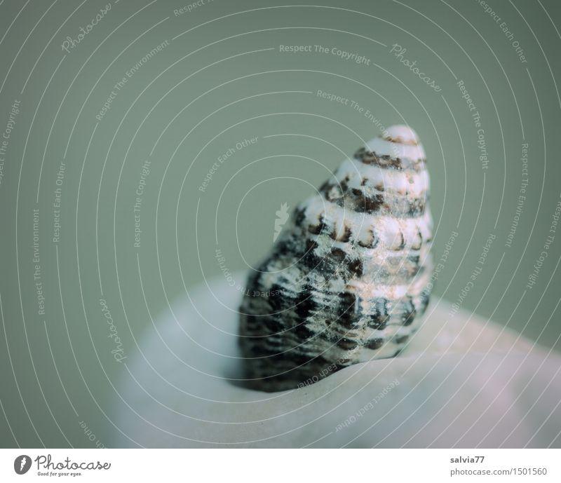 Strandhaus Meditation Natur Tier Schnecke Muschel 1 klein maritim nackt rund Stadt braun grau grün Einsamkeit einzigartig Schutz Spirale Strukturen & Formen