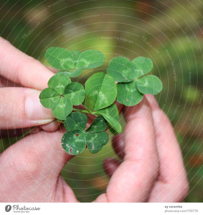 Genug Glück für alle Natur Hand grün Sommer Freude Wiese Erfolg Ernte danke schön Blume Kleeblatt Mensch Slowenien