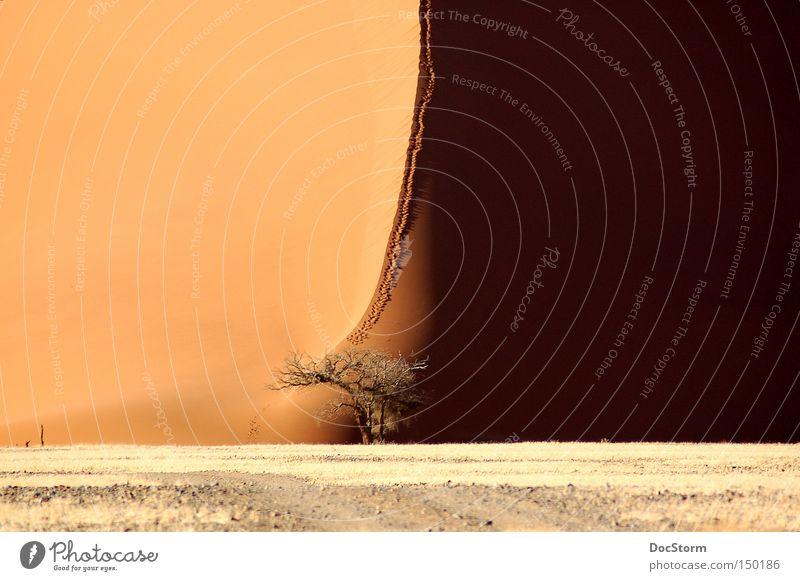 Licht und Schatten Wüste Sand leer Einsamkeit ruhig Afrika braun hell Schönes Wetter Freiheit trocken Spuren Baum Freude schwarz
