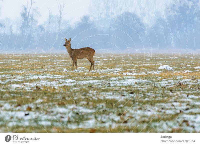 Einsames Reh in der Kälte Natur Landschaft Pflanze Tier Winter Nebel Eis Frost Schnee Wiese Feld Wald Wildtier Tiergesicht Fell Rehwild 1 stehen