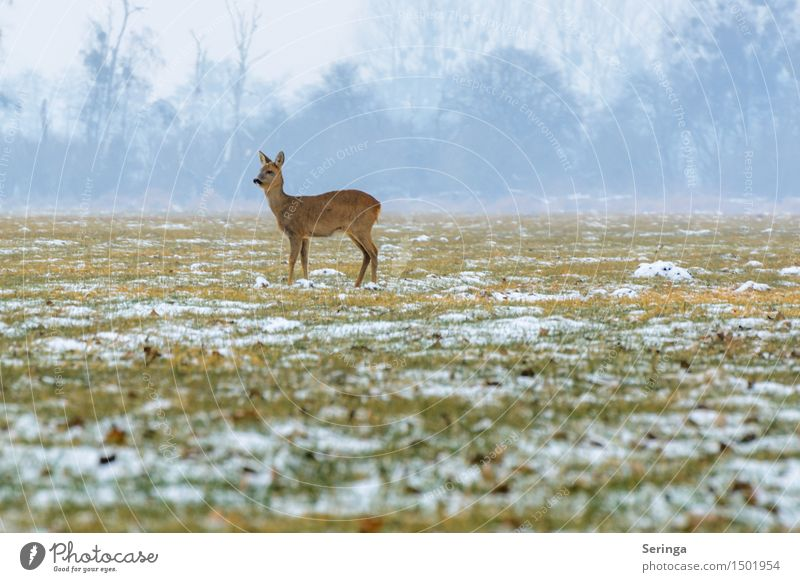 Einsames Reh in der Kälte Natur Pflanze Landschaft Tier Winter Wald Wiese Schnee Feld Nebel Eis Wildtier stehen Frost Fell Tiergesicht