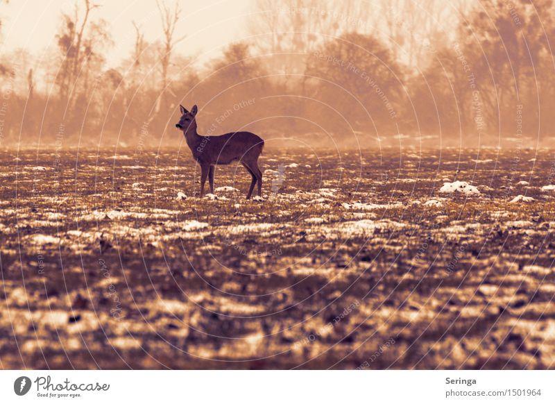 Einsames Reh auf der Wiese Natur Winter schlechtes Wetter Nebel Schnee Feld Tier Wildtier Fell 1 Fressen frieren Blick Damwild Rehkitz Farbfoto Gedeckte Farben