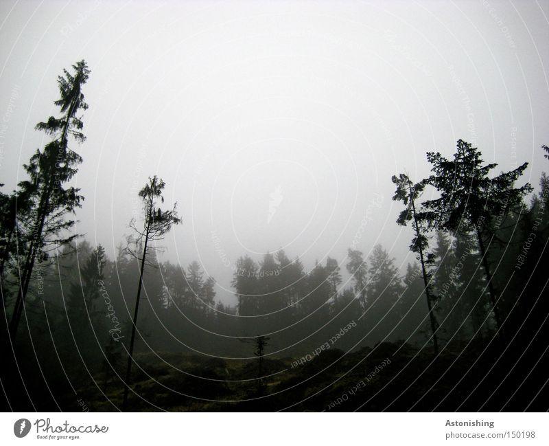 bedrückend Natur Landschaft Nebel Baum Wald Traurigkeit kalt grau schwarz Nadelbaum Abholzung Baumstamm Zweig Boden Kontrast Froschperspektive Menschenleer