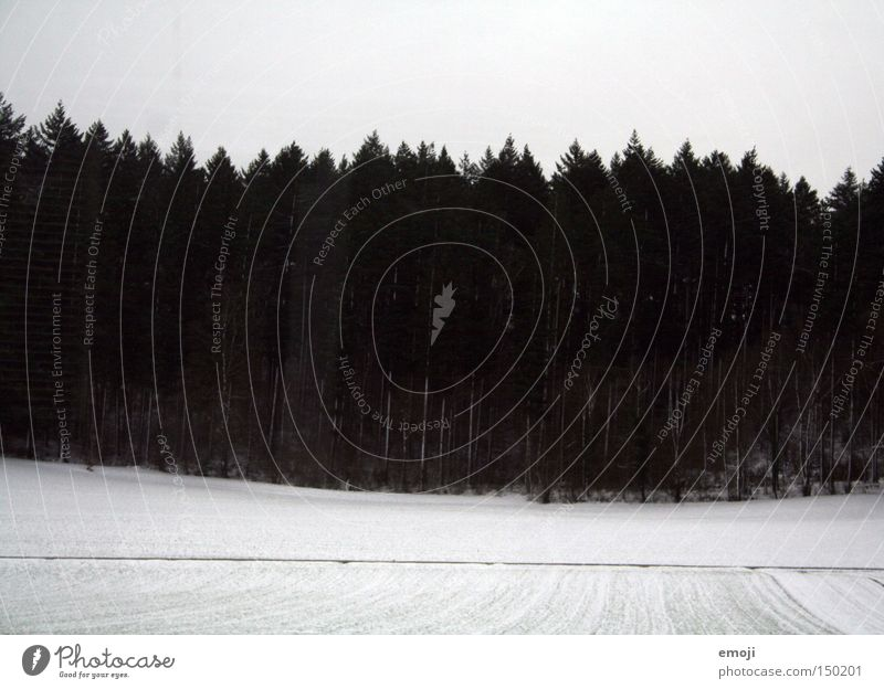 schwarzweiss II Natur weiß Baum Pflanze Winter schwarz Wald Schnee Fenster Feld Eisenbahn trist Bahnfahren