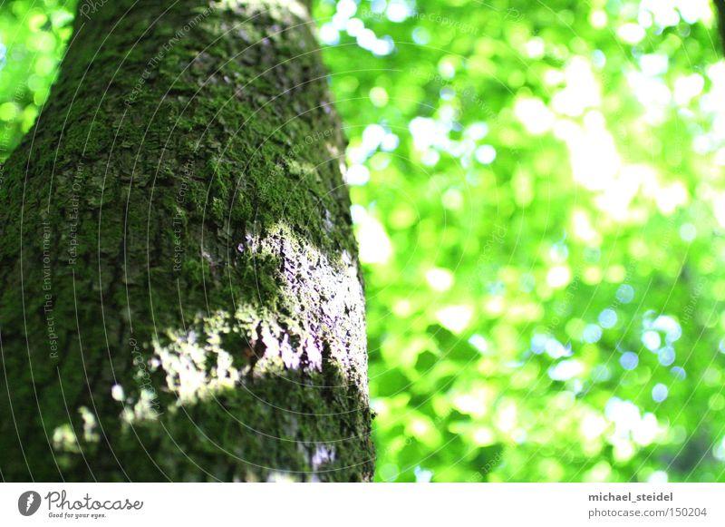 Träumerei Baum grün träumen Natur Baumrinde Licht Blatt