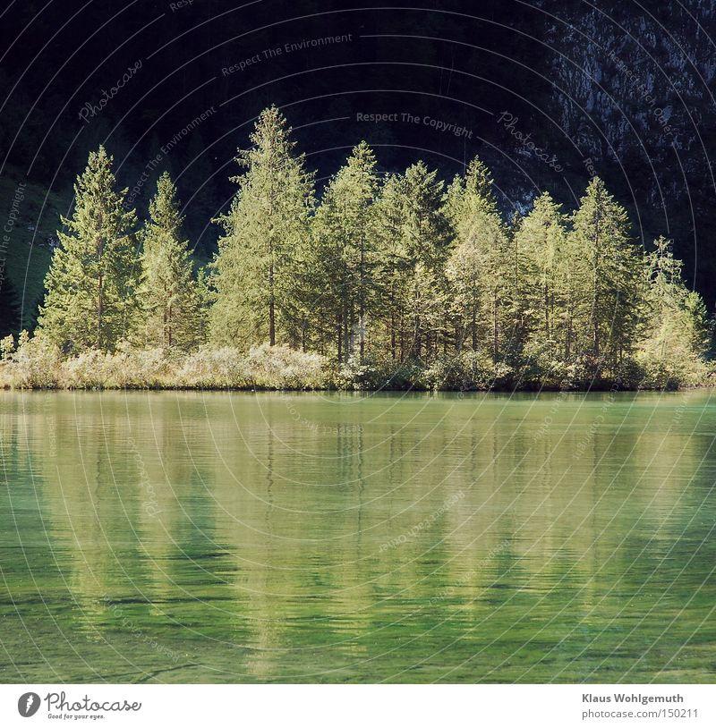 Entrückt Natur grün Sommer Wasser Baum Erholung Landschaft ruhig Wald schwarz Umwelt Berge u. Gebirge See Idylle Wellen Schönes Wetter