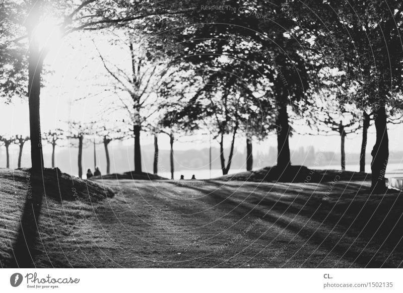 am rhein Mensch Menschengruppe Umwelt Natur Sonnenlicht Frühling Sommer Schönes Wetter Baum Park Wiese Flussufer Rhein Düsseldorf Freizeit & Hobby