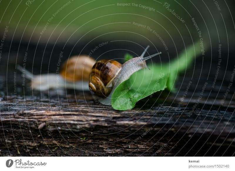 Zielfoto Natur grün Blatt Tier natürlich Holz glänzend Wildtier authentisch nass Neugier nah Klettern Barriere Löwenzahn krabbeln