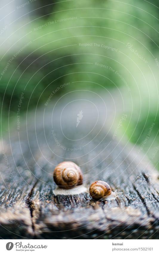Groß und klein Natur Tier Frühling Holz Regen Park glänzend Wildtier authentisch groß nass Holztisch Schnecke krabbeln Schneckenhaus