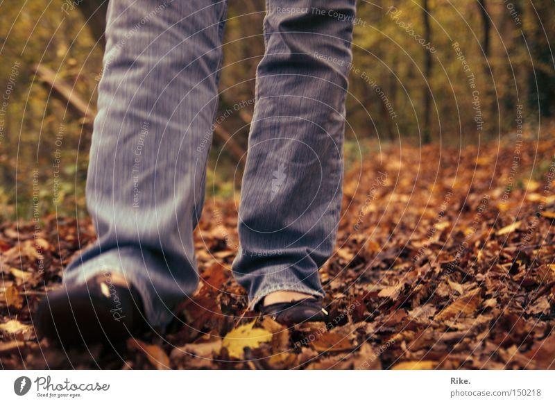 Durch das Laub. Wald Baum Natur Umwelt Blatt Herbst herbstlich gehen laufen Spaziergang Bewegung Freizeit & Hobby