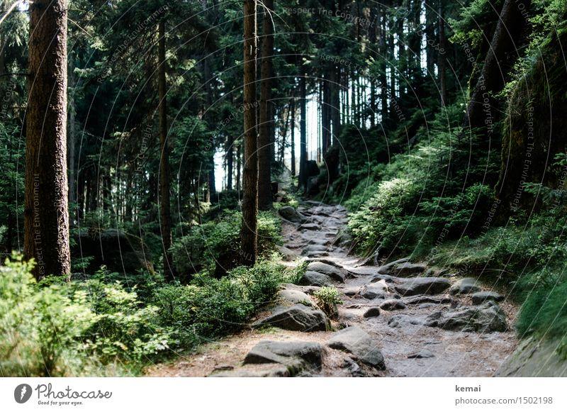 Die steinigen Pfade wandern Umwelt Natur Landschaft Pflanze Sonnenlicht Sommer Schönes Wetter Baum Sträucher Wald Felsen Berge u. Gebirge Fußweg