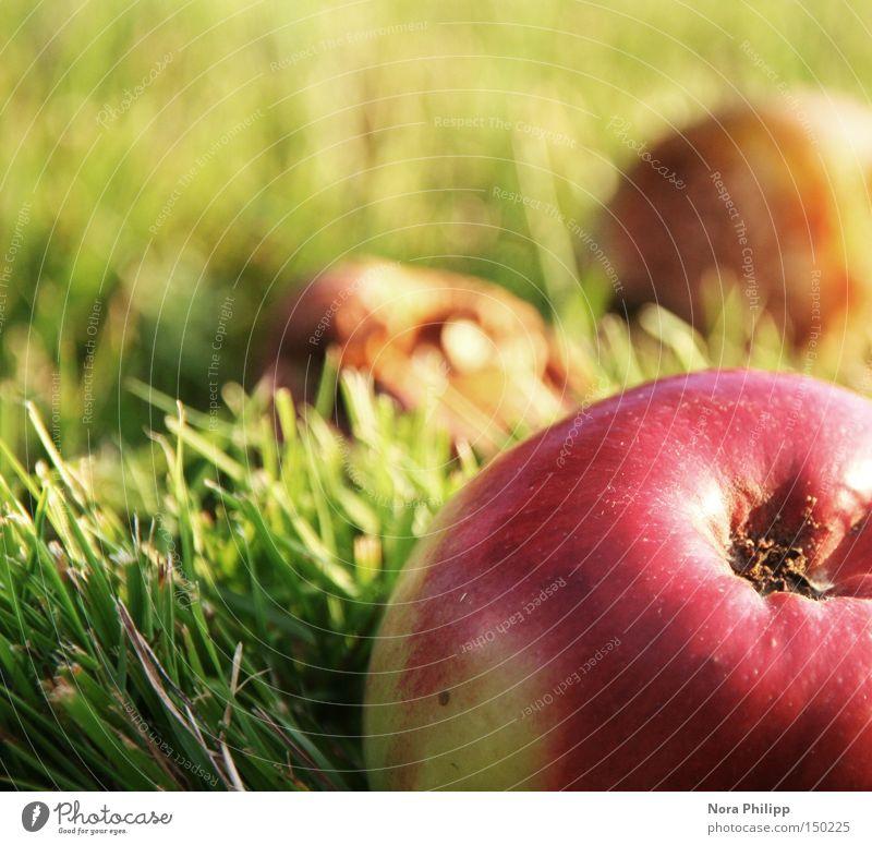 frisch und knackig Natur grün rot Ernährung Herbst Wiese Gesundheit Umwelt Frucht Apfel lecker genießen Wohlgefühl Vitamin Glätte