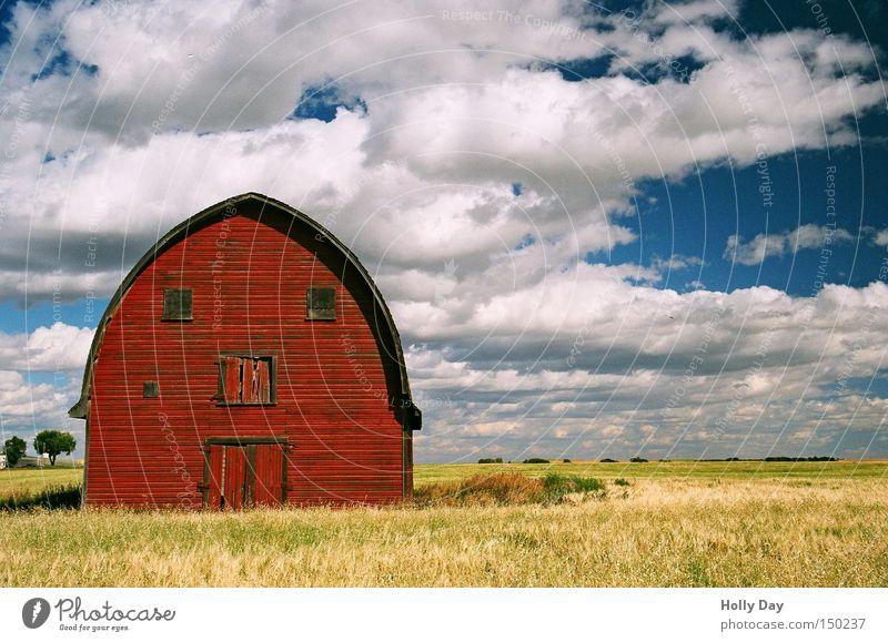 Mach nicht so ein Gesicht rot Ferien & Urlaub & Reisen Auge Wolken gelb Feld gold Bauernhof Landwirtschaft Amerika Ernte Kanada Scheune Alberta