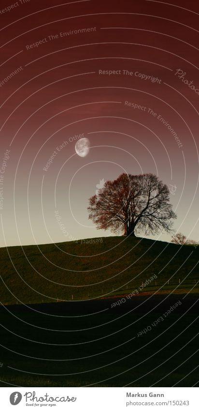 Einsamer Baum Natur Himmel Baum rot Einsamkeit Herbst Landschaft Feld Trauer Hügel Mond Verzweiflung Bayern Abenddämmerung vertikal Herbstfärbung